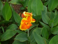 Flower at the Arenal volcano
