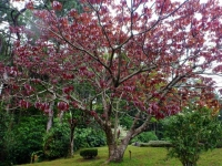 Tree at the Arenal volcano