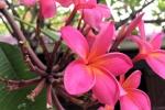 160606 Garden 1.jpg