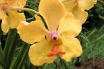 160606 Garden 22.jpg