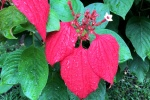 160606 Garden 23.jpg