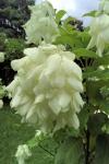 160606 Garden 24.jpg