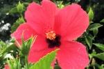 160606 Garden 26.jpg