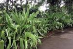 160606 Garden 30.jpg