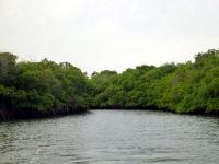 Amortajada Mangroves