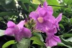 160606 Garden 43.jpg