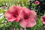 160606 Garden 51.jpg