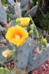 170525-Botanic-Park-8.jpg