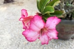 170525 Botanic Park 11.jpg