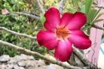 170525 Botanic Park 12.jpg
