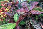 170525 Botanic Park 14.jpg