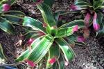 170525 Botanic Park 16.jpg