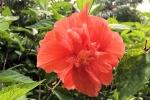 170525 Botanic Park 20.jpg