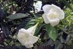 170525 Botanic Park 21.jpg