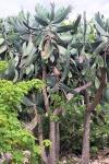 170525 Botanic Park 5.jpg